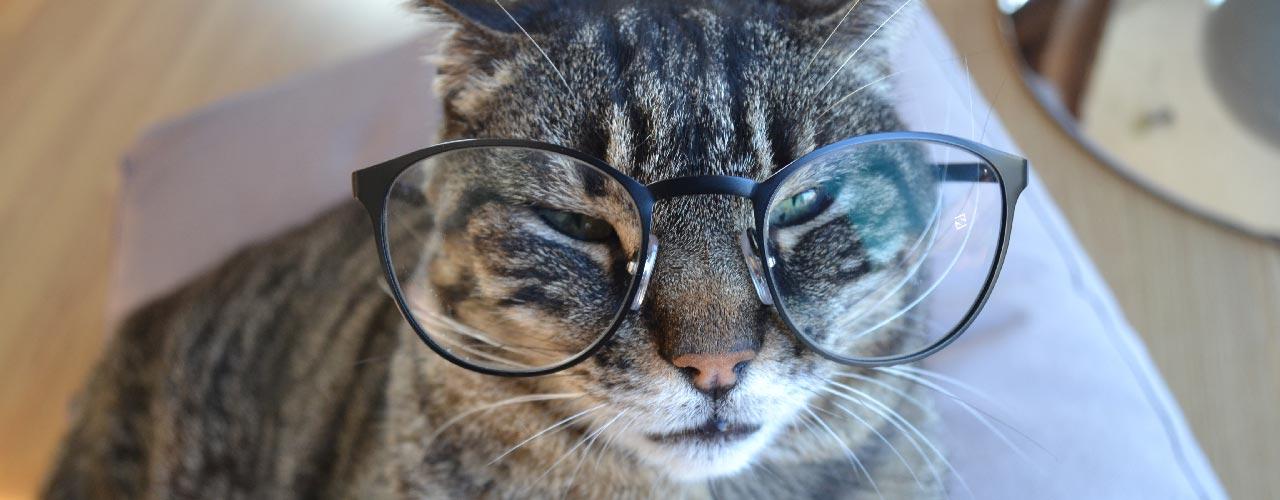 actualité de planning-chat