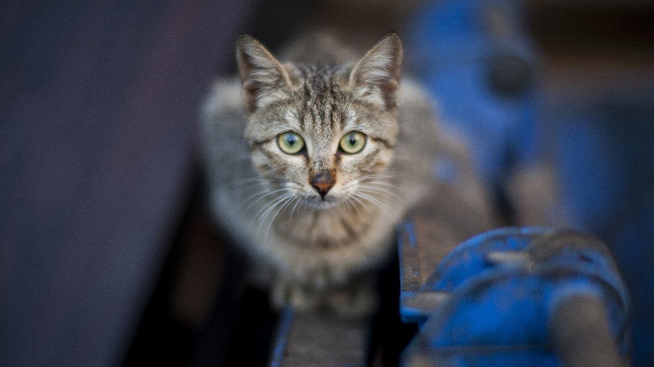 chat abandonné