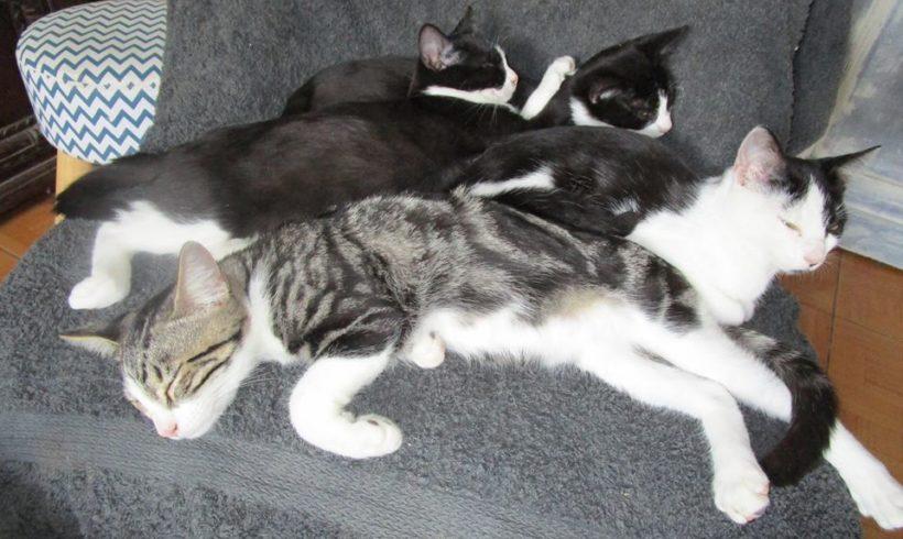 Foster chats : suivez le quotidien d'une famille d'accueil