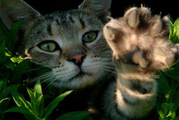 Urgences chats en attente de famille d'accueil !