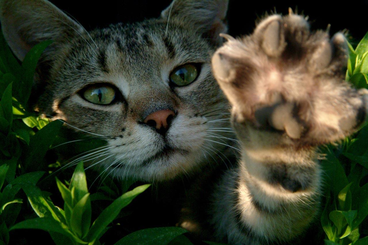 famille d'accueil chat urgent