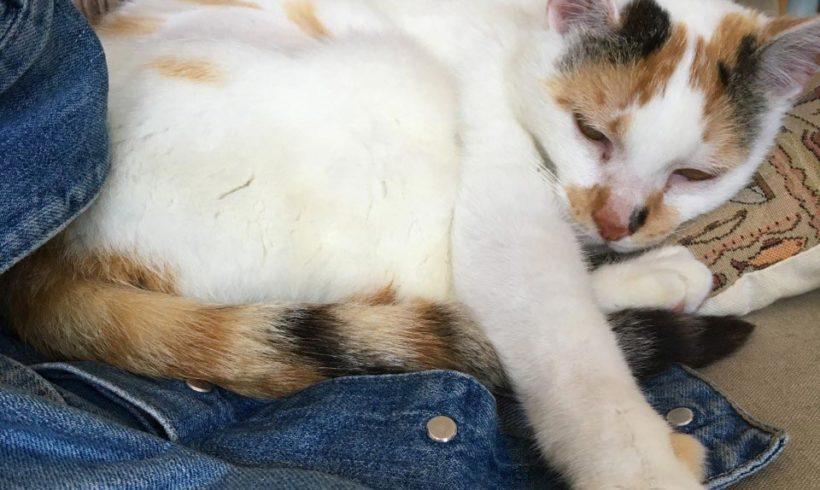 Mimi, retrouvée après 2 ans !