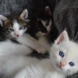 Histoire de chats et doux Ronron