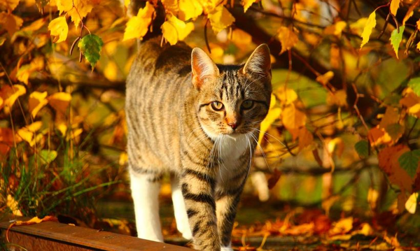 L'automne est là, prenons soin des chats !