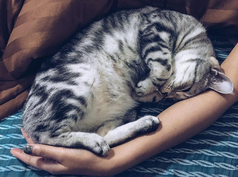 Information : vous avez adopté à Planning-Chat un chaton né ce printemps ?
