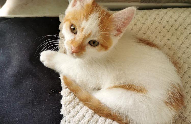 Eren est adopté