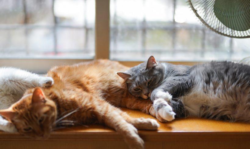 Qu'est-ce que le typhus du chat?