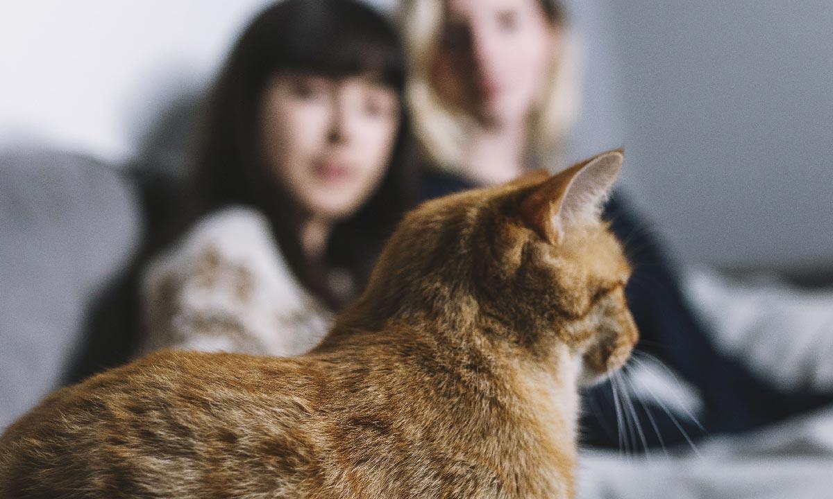 Témoignages des adoptants des chats