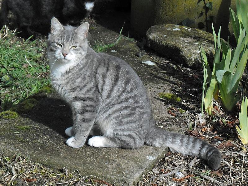 vico chat adopté
