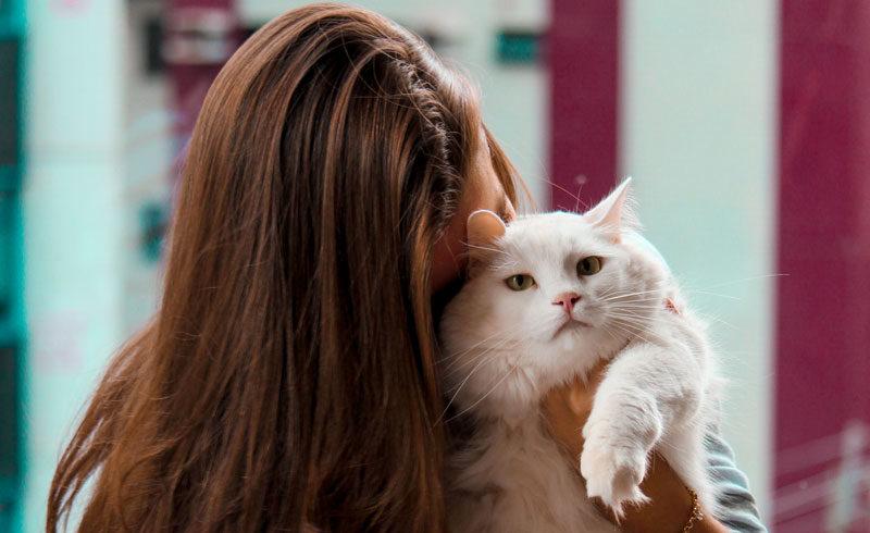 Vous souhaitez adopter un chat/chaton