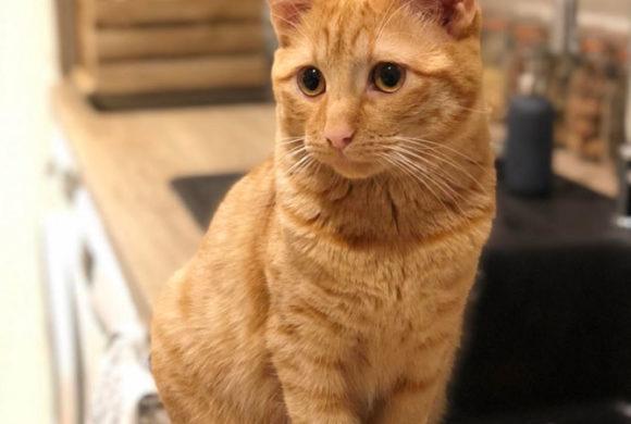 Basile, un heureux adopté