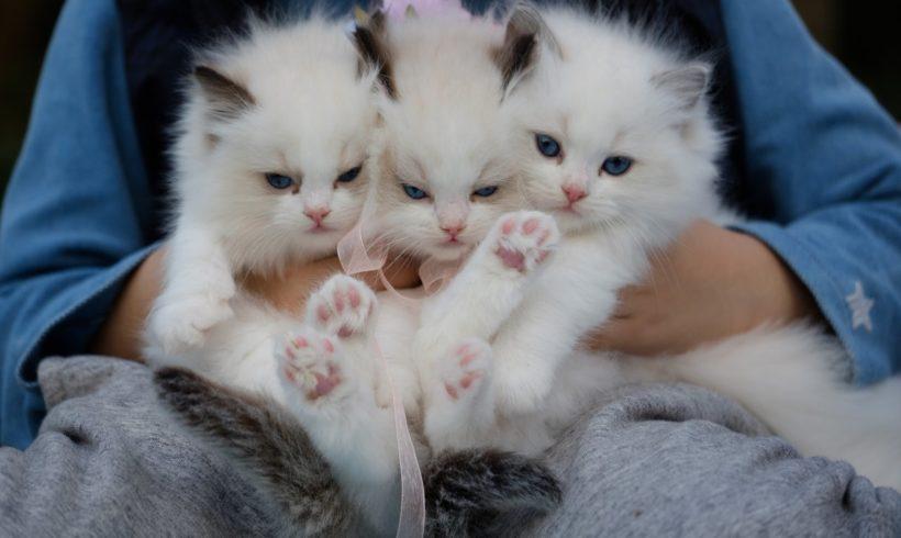 Que faire si vous trouvez des chatons abandonnés?